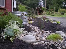 Rain Garden 1