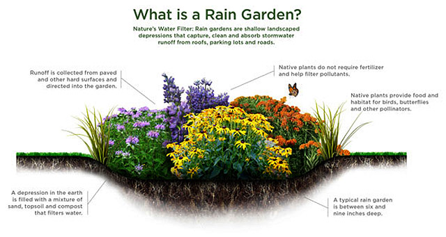 nj-rain-garden-graphic