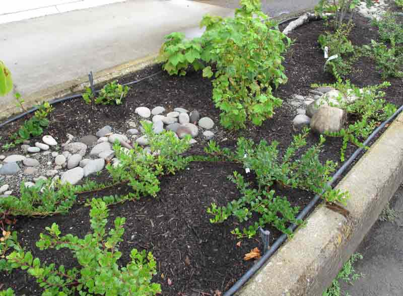 NativeEdiblesGarden