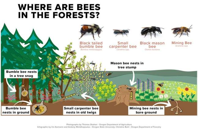 NativeBeeHabitatPoster